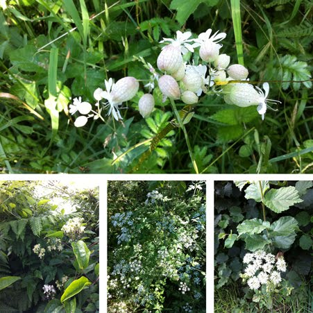 hedgerow_flowers_sussex451